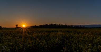 Sonnenuntergang überm Rapsfeld