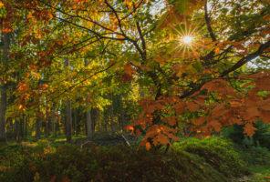 Sonntagslicht im Segeberger Forst